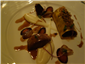 cannelloni with foie gras